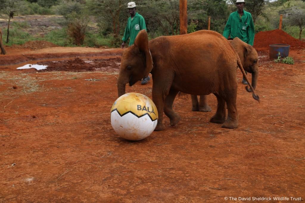 Baby elepehant 2